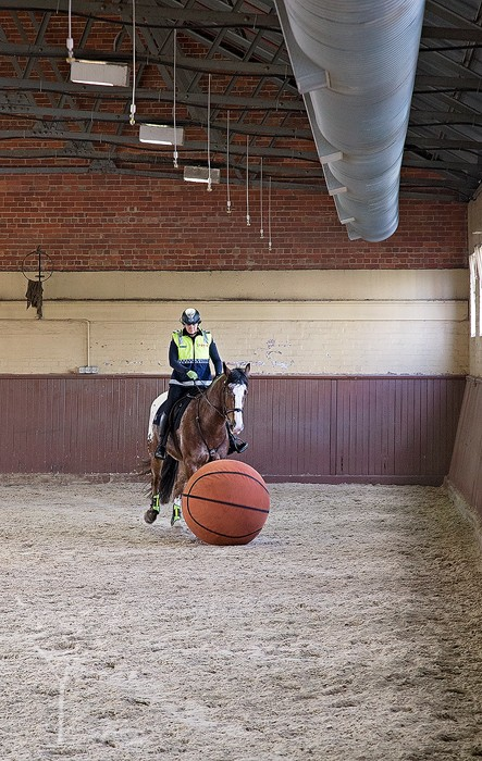Victoria Police Mounted Branch