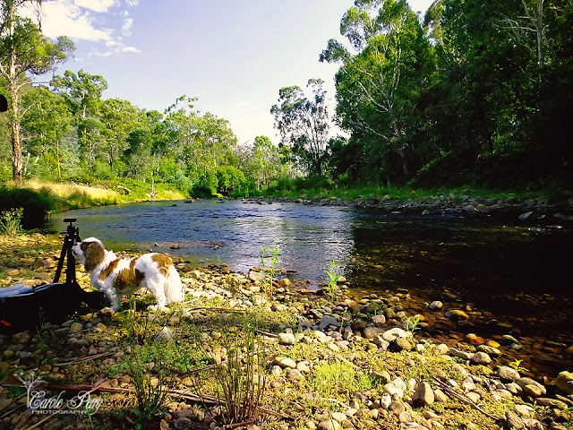 Miss Maggie supervising the 'shoot' King River